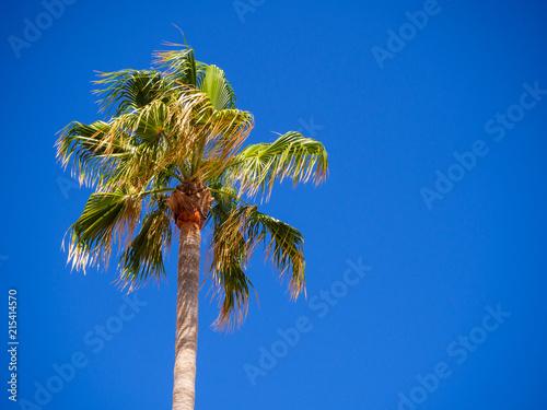 Spoed Foto op Canvas Palm boom Green palm tree on blue sky background