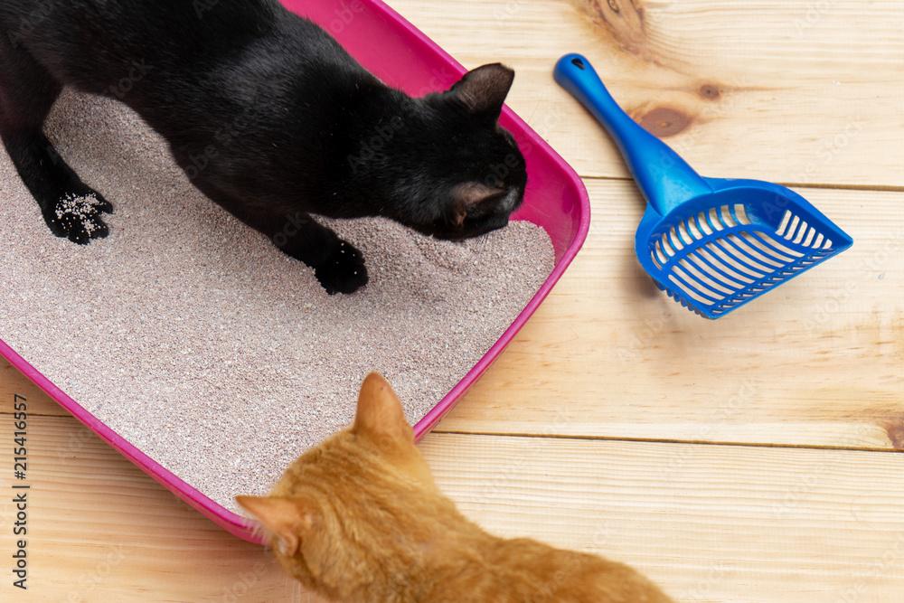 Fototapeta cat litter box