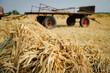 canvas print picture - Getreideernte wie früher - Getreidegarben vor altem Erntewagen