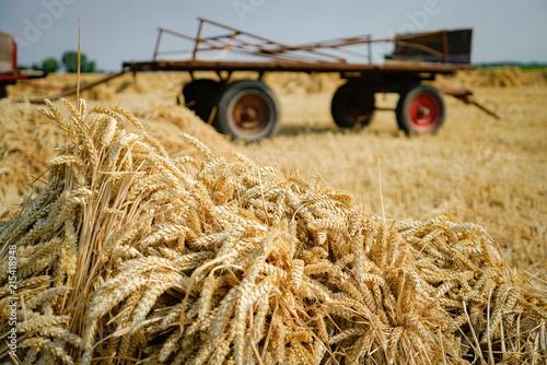 Fotografie, Obraz  Getreideernte wie früher - Getreidegarben vor altem Erntewagen