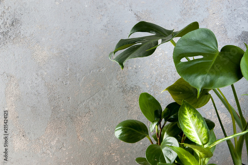 zielone-rosliny-na-szarosc-betonuja-tlo