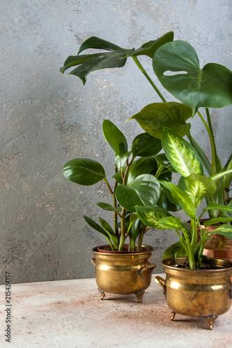 zielone-rosliny-w-mosieznych-i-miedzianych-doniczkach