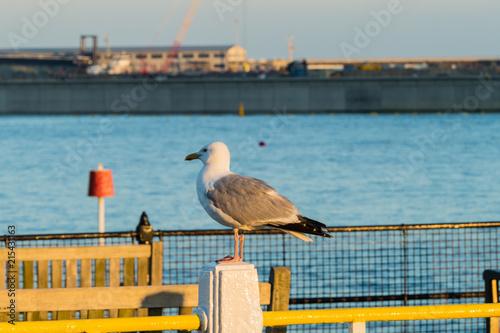 In de dag Poort Möwe Dover Hafen Gull harbour