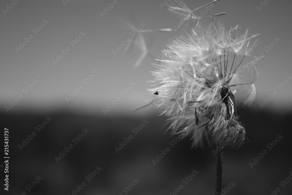 Fototapety, obrazy: Natureza P&B