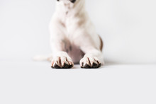 Dog Paws On Isolated White Background