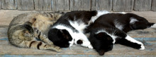 Three Cats Sleep (rest), Funny...