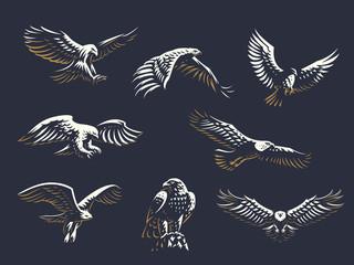 Skup vektorskih orlova.