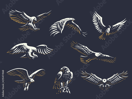 Photo Set of vector eagles.