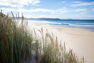 FototapetaNative grass on the beach in Bruny Island, Tasmania, Asutralia