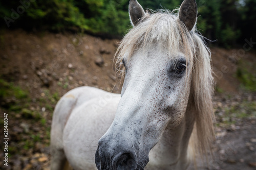 Horse eating in meadow