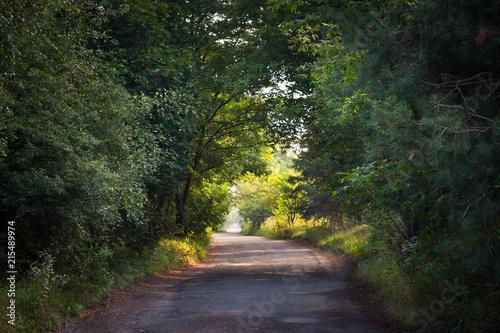 Tuinposter Weg in bos Droga przez las