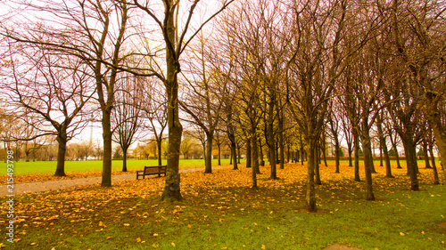 Spoed Foto op Canvas Herfst Autumn scene of bare trees and fallen leaves in a park.