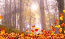 Sonne Im Herbstwald