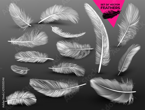 Fotografija Set of falling white fluffy twirled feathers on in realistic style