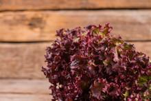 Salad Leaves, Purple Lettuce. ...