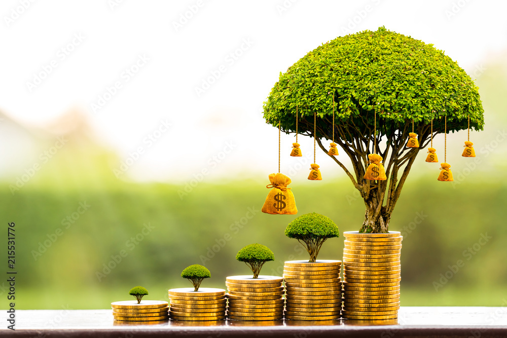 Obraz Stacking gold coins and money bag of tree with growing put on the wood on the morning sunlight in public park, Saving money and loan for business investment concept. fototapeta, plakat