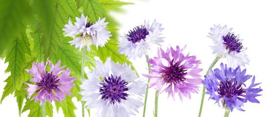 Panel Szklany Podświetlane Ogrody beautiful flowers in the garden close up