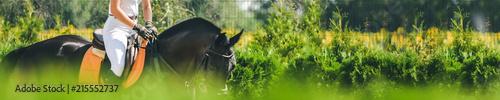 Fotografie, Obraz  Horse horizontal banner for website header design