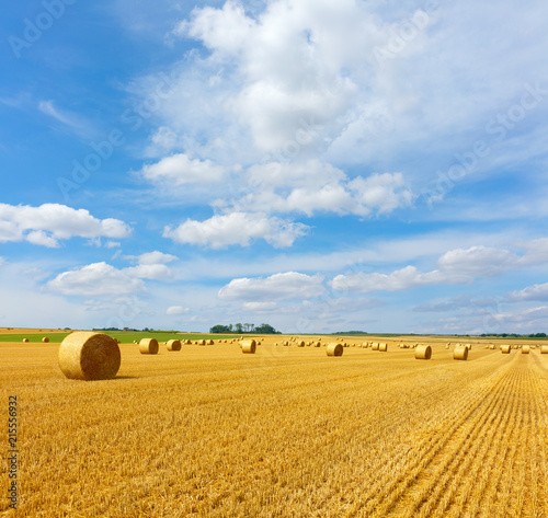 Fotobehang Platteland Yellow golden straw bales of hay in the stubble field, agricultural field under a blue sky with clouds