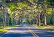 canvas print picture - Road Through Oak Trees