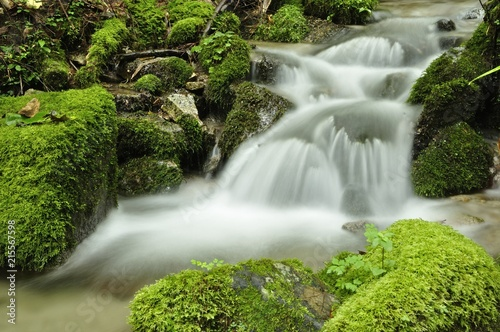 Foto auf Gartenposter Forest river 水源林の清流