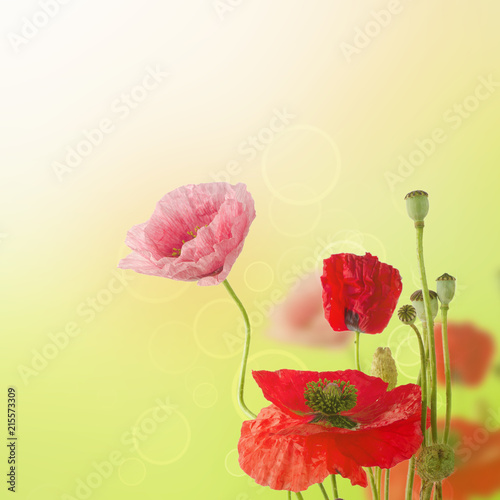 Tuinposter Bloemen Abstract natural summer or spring floral background with bunch of red and pink poppy flowers with copy space