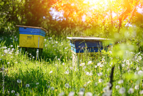 Polish landscape with beehives on ecological field