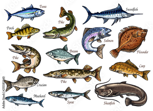 Fotografie, Obraz  Fresh fish and seafood isolated sketches