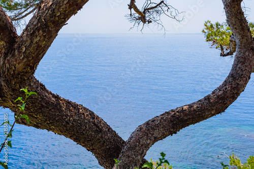 Платно Abstract composition with tree branches on Cape Martin