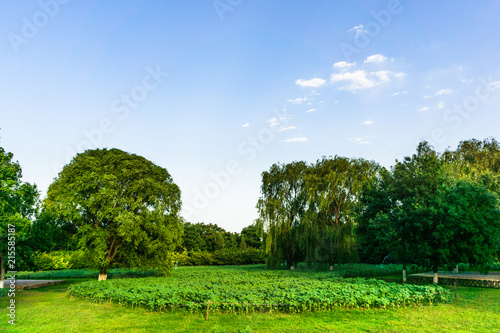 Poster Blauwe hemel Summer sunny lawn