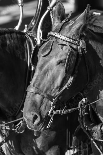 Horses 21