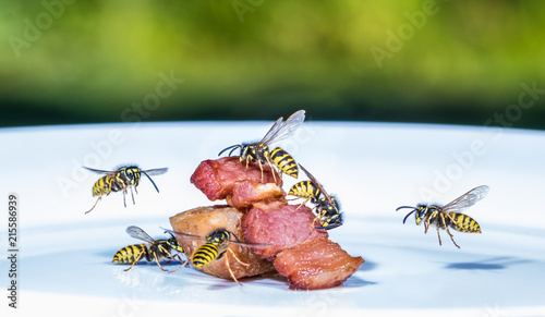 Valokuva  a swarm of wasps flies on a plate and eats fried meat