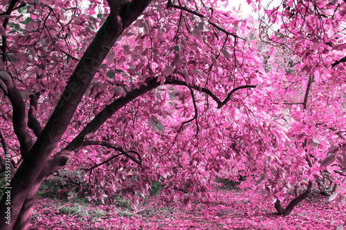 Foto op Plexiglas Crimson Mysterious autumn magnolia garden