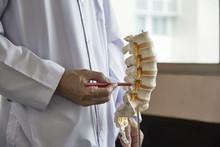 A Neurosurgeon  Pointing At Lumbar Vertebra Model In Medical Office