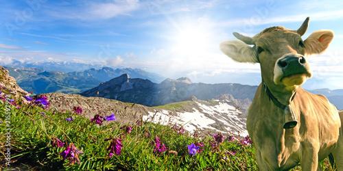 Foto auf AluDibond Europäische Regionen Glückliche Kuh in der Schweiz :)