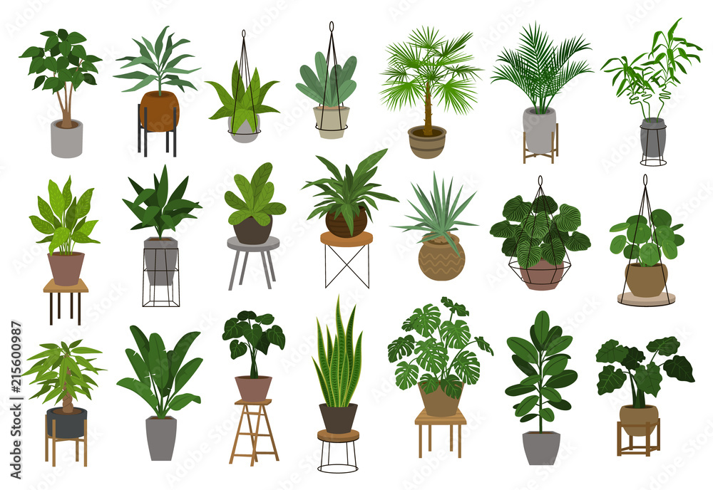 Fototapeta collection of different decor house indoor garden plants in pots and stands graphic set