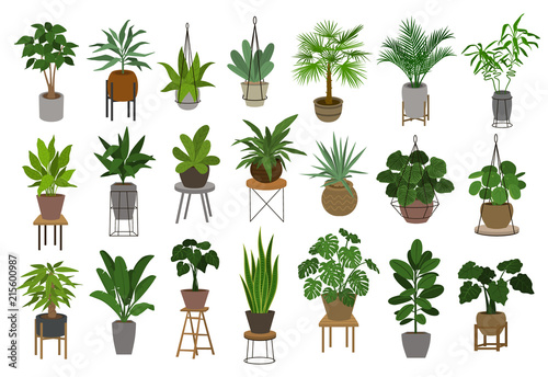 Obraz collection of different decor house indoor garden plants in pots and stands graphic set - fototapety do salonu