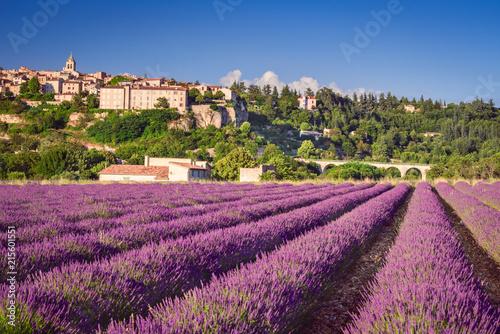 Fototapeta Sault village lavender field in Provence, France obraz