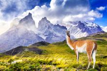 Torres Del Paine, Patagonia, C...