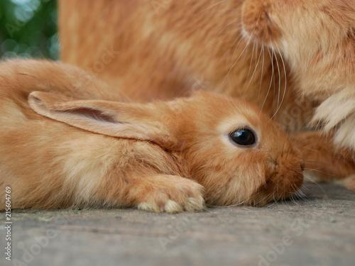Fotodibond 3D Polonne / Ukraina - 3 czerwca 2018: odpoczynek królików