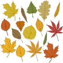 Vector Set Of Cartoon Autumn Tree Leaves.