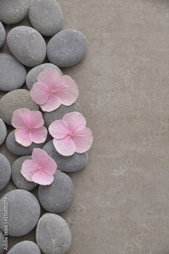 Tuinposter Spa Pink hydrangea petals with gray stones on gray background