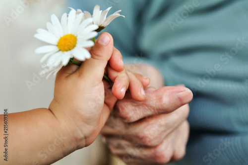 Fotografie, Obraz  baby hand gives chamomile for older woman on holiday
