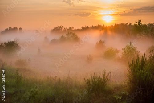 Foto op Aluminium Zalm Summer landscape of the foggy field