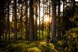 Sonne leuchtet durch den Wald im Sommer