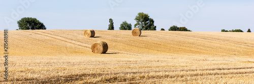 Stampa su Tela Field with hay bales on a sunny day