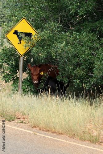 Poster Nieuw Zeeland Roadside cow caution