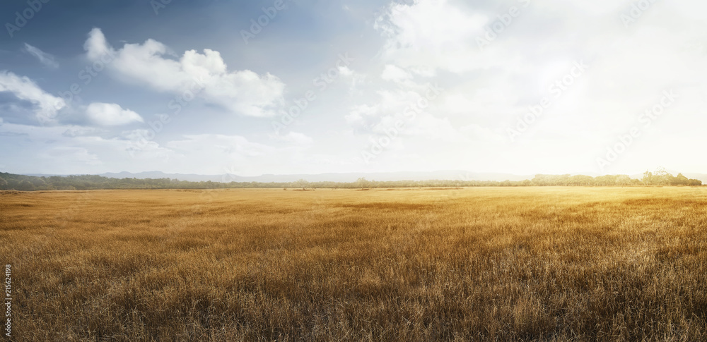 Fototapety, obrazy: Landscape view of dry savanna