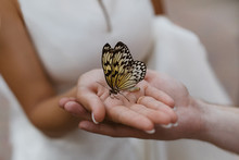Butterfly On The Palm. Hand In Hand. The Couple Gently Holds Hands.