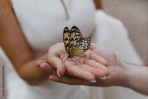 butterfly on the palm.